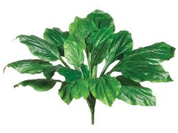 variegated-hosta-leaf-bush